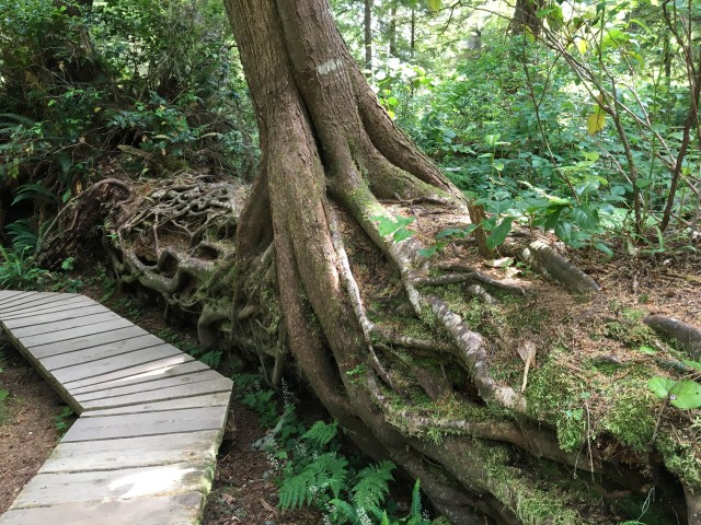 •e-IMG_0966-nurse tree