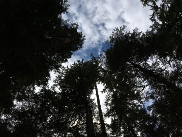 •e-IMG_0986-sky trees