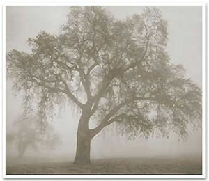 Twin trees in fog-Kerik Kouklis