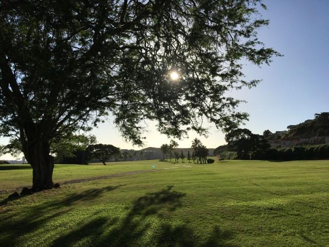 •e-img_5632-sun tree golf